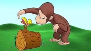Desenho George o Curioso e Bob esponja calça quadrada em Português completo