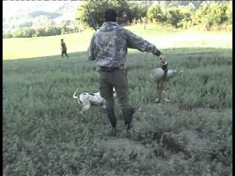 Caccia con il cane da ferma-Sara di Mauro-Caccia e pesca-.MPG