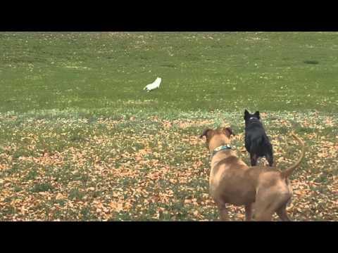 犬が庭に出ると猫がいるので追いかけると猫が驚異的な身体能力でジャンプして逃げる!
