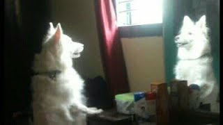 Funny Dogs- A Funny Dog Videos Compilation | Cute Dogs | YouTube Star Princess Lancy