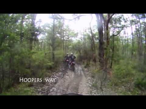 """Hooper Highlights - including """"the tree""""!"""