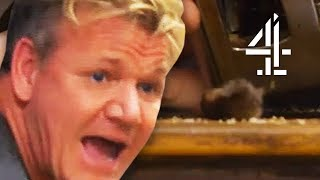 Gordon Ramsay REVOLTED by DEAD MOUSE in Toaster!   Gordon Ramsay's 24 Hours To Hell and Back