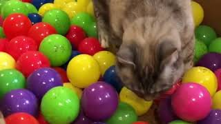 Funny Animal Funny Cat Videos -play time compilation 1