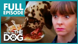 Food Thief Dalmatian: Pongo | Full Episode | It's Me or The Dog