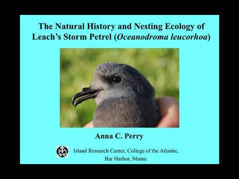 Anna Perry - The Nesting Ecology and Natural History of Leach's Storm Petrel