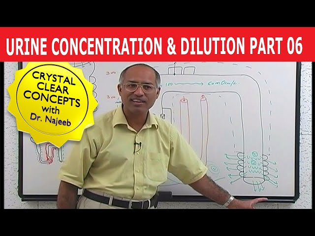 Urine Concentration and Dilution 6/13
