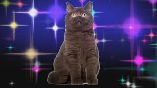 Прикол! Коты Поют Шансон! Геленджик - Игорь Огурцов!!!