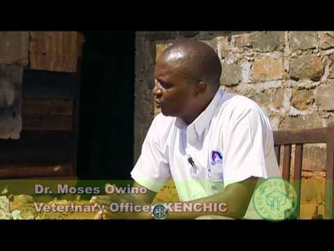 Series 1-Episode 3 [Shamba Shape Up Episode 3], Scene 2