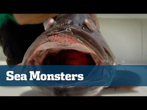 Hammerhead Shark Fishing With A Surprise Monster Warsaw Grouper