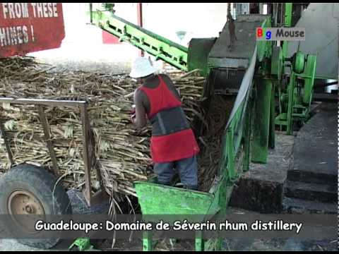 Guadeloupe: sugar cane and rhum (travel clip)