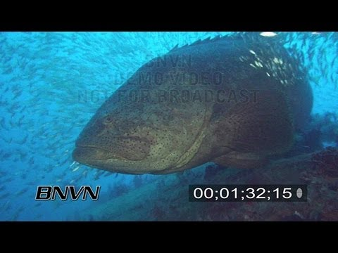 7/22/2007 Baja Mexico Ship Wreck & Goliath Grouper