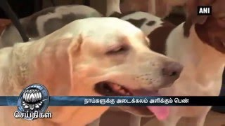 Amidst Animal Cruelty, Meet Woman With 46 Dogs - Dinamalar May 9th 2016