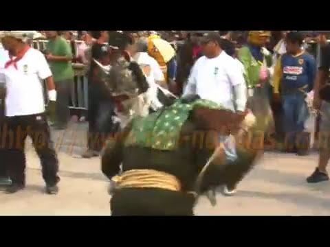 RED Noticias - Pelea de tigres tradición milenaria en Zitlala