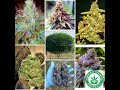 Grow Better Weed!