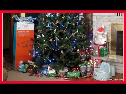 SANTA CAUGHT ON CAMERA   Merry Christmas Everyone!