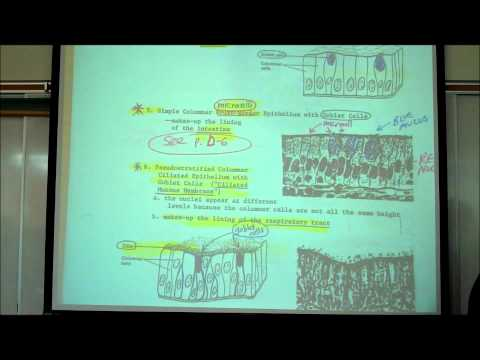 HISTOLOGY; EPITHELIAL TISSUES by Professor Fink