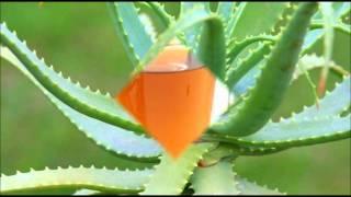 Video Sobre algunas plantas medicinales