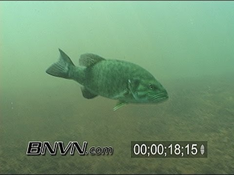 Various Small Mouth Bass Underwater Video 2006, Part 1 of 3