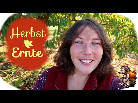 Herbst Ernte im Garten │ Gemüse Obst Kräuter Saatgut