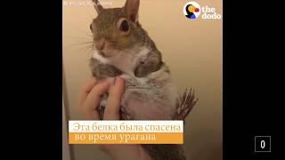 Белка спасенная от урагана #спасенные животные / канал онлайн / Эмоции животных