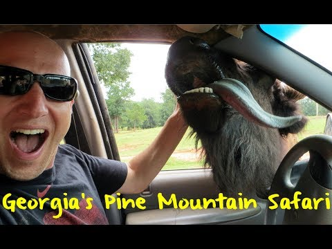 The Wild Animal Safari in Pine Mountain Georgia
