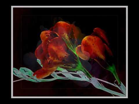 Kwiaty Z Okazji Urodzin