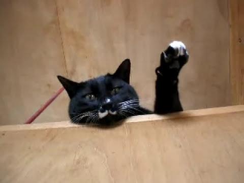 呼ばれると手を挙げて返事をする猫