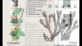 Enciclopedia de la Plantas Medicinales - México Montemorelos