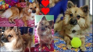 Bengali vlog # Funniest🐶 Dog Awesome Funny Pet Animals Life Videos😇part 2/ছাদে পুকু with বল