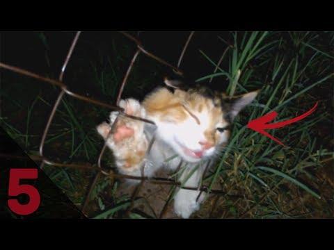 5 gatti salvati dalla morte