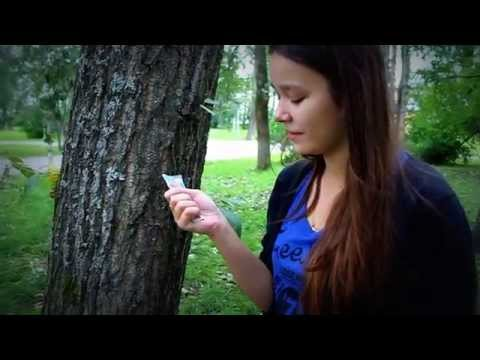 интервью у дерева