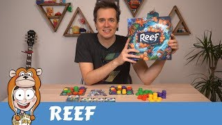 Reef Board Game Review - Actualol