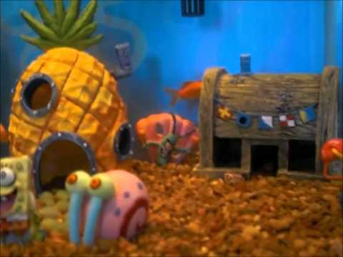 New 10g aquarium with spongebob theme fish tank youtube for Spongebob fish tank
