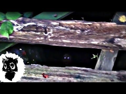 5 ПОДЗЕМНЫХ МОНСТРОВ СНЯТЫХ НА КАМЕРУ [Черный кот]