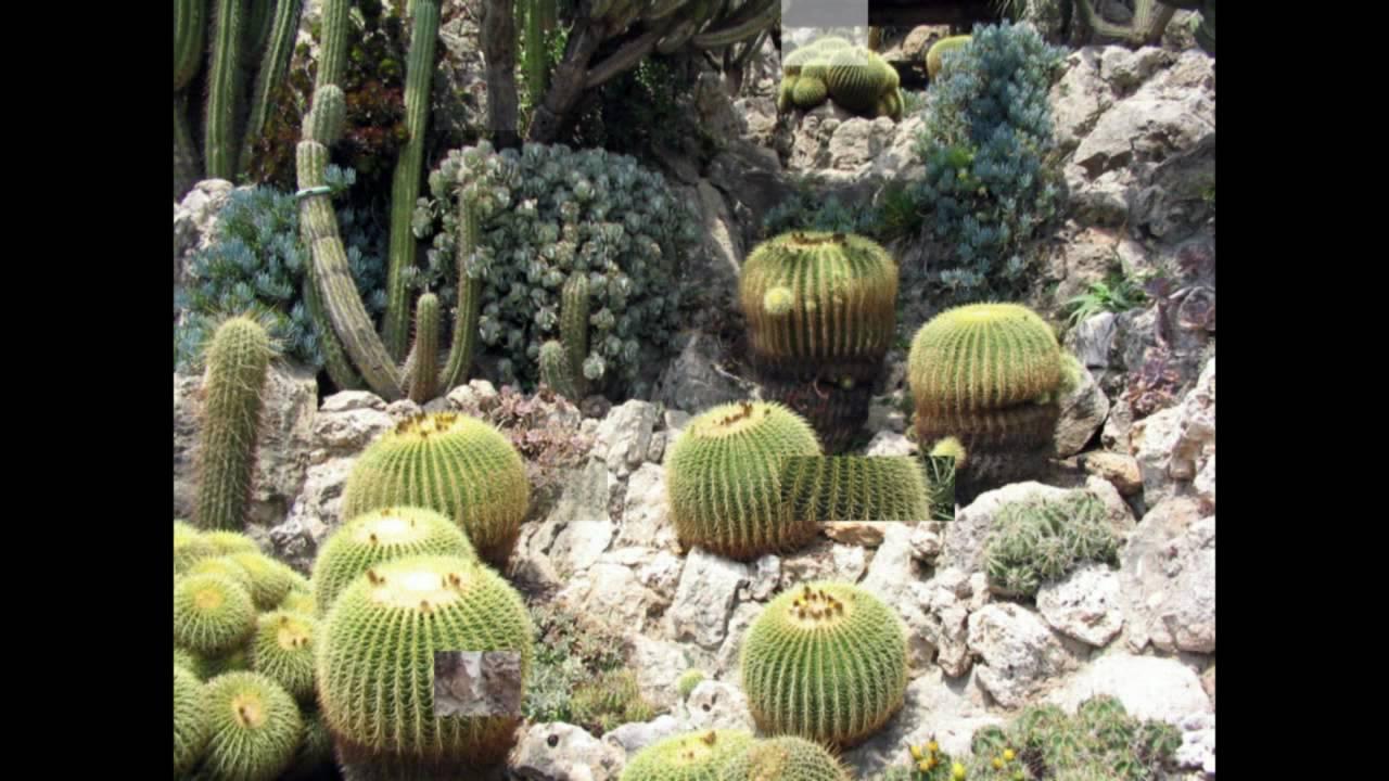 Le jardin exotique de monaco youtube - Photo de jardin exotique ...