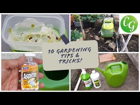 10 Gardening Tips & Ideas every gardener should know