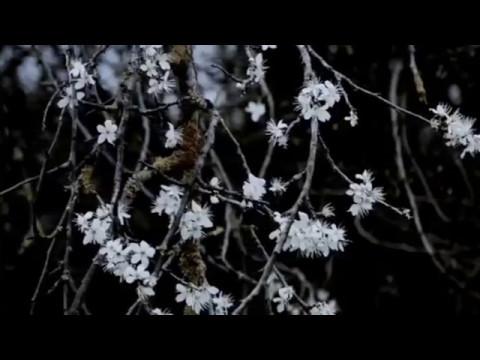 2017台北電影節|焦點影人:尤裏・安卡拉尼|關於現代的追憶 Memories for Moderns