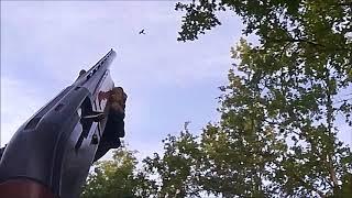 chasse palombe au mirador 2017 2018 tire au vol