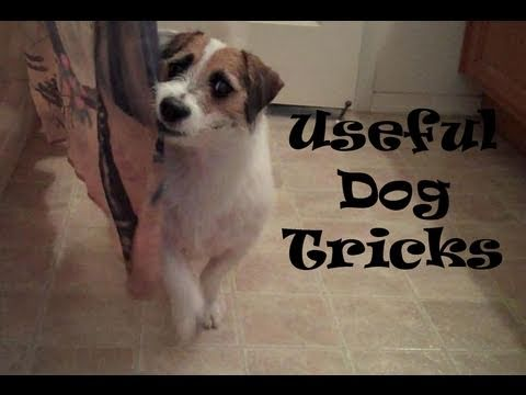 0 Useful Dog Tricks performed by Jesse (Original Video)