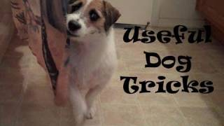 Useful Dog Tricks performed by Jesse (Original Video)