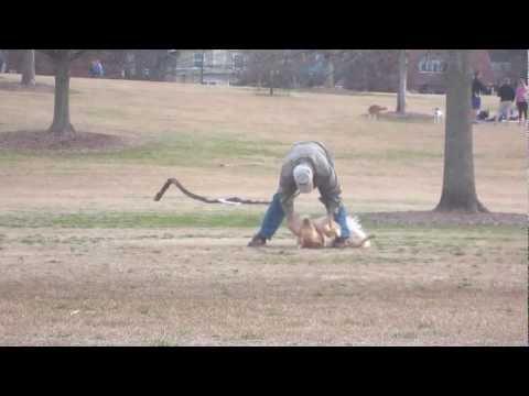 Este Golden Retriever no quiere irse del parque