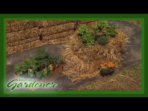 Hay Bale Gardening