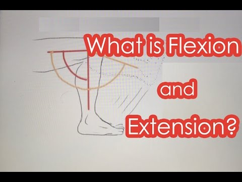 What is Flexion and Extension?