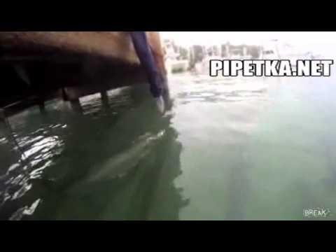 Опасное кормление акул
