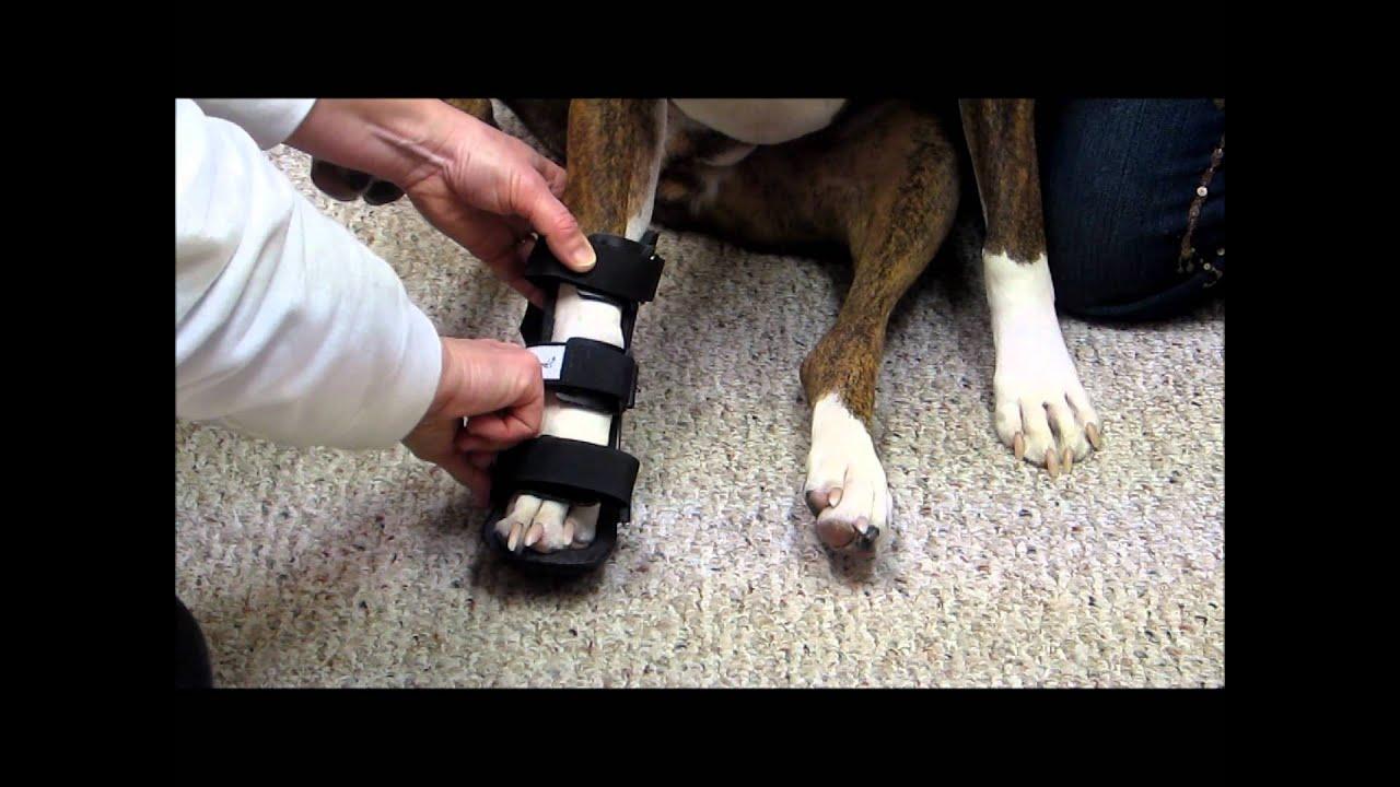 How To Put A Leg Splint On A Dog Youtube