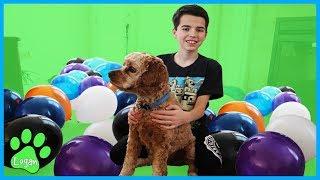 Logan Vs. Balloons / Logan The Adventure Dog