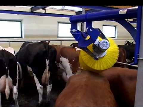 Swinging cow brush