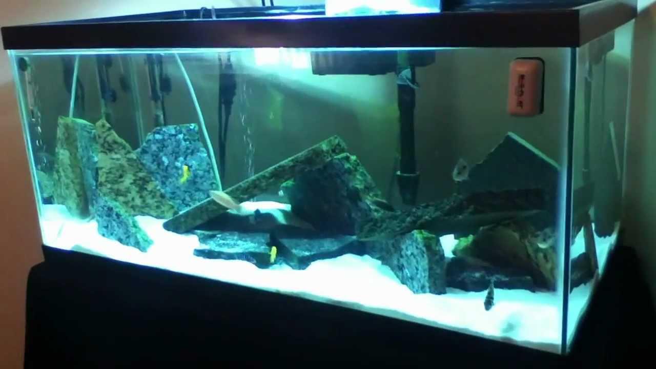 Cichlid Sand Tank With Granite Rocks Showing 40 Breeder