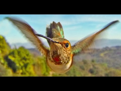 Bird Photo Booth for iPhone and GoPro- Experience nature like never before