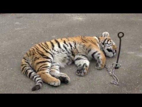 Ессентуки, Московский зоопарк. Многодетная семья.